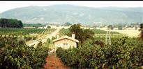 Domates, üzüm ve zeytin'e yolculuk