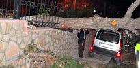 Lodos dev ağacı kökünden söktü
