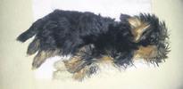 Kargoya konulan köpeği donup öldü