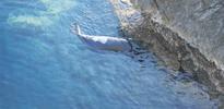 Akdeniz foku katledildi