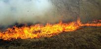 Kaz Dağları yanıyor