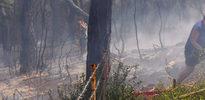 Büyükada'da korkutan yangın!