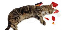 Kediye çarpan kişi ne yapmalı?