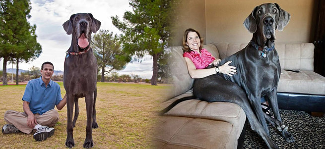 Dünyan�n en büyük köpe�i öldü