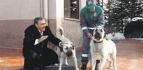 Köpeklere kimlik kartı