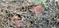 Yalova Belediyesi ağaçları hayır işinde kullanacak