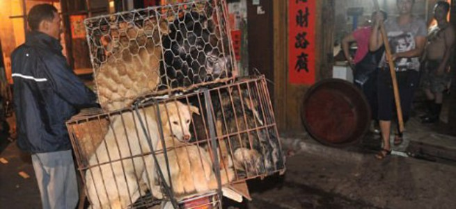 'Köpek Yeme Festivali'ne tepki yağıyor