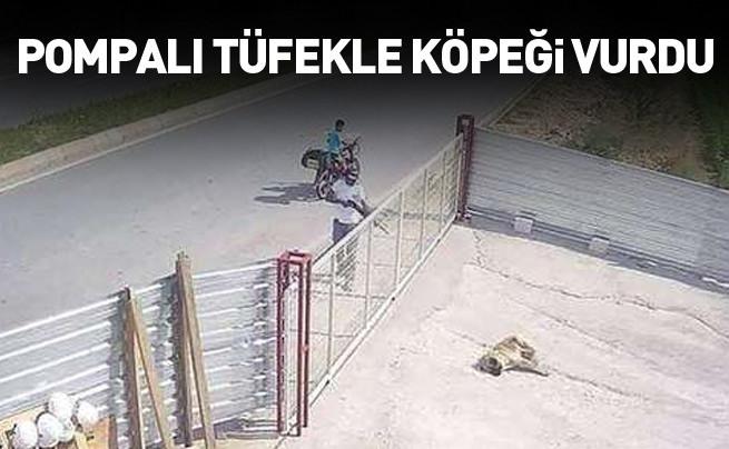 Köpeği pompalı tüfekle öldürdü