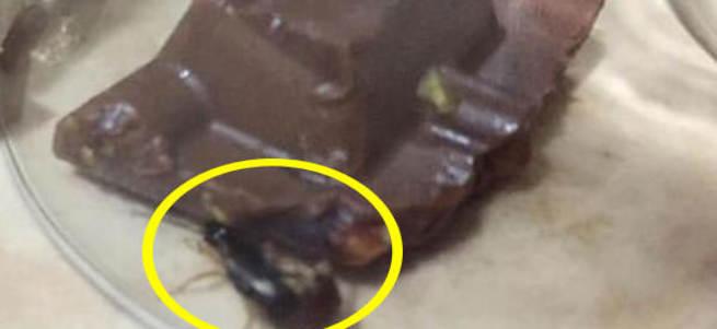 Çikolatadan çıkan böcek dilini ısırdı