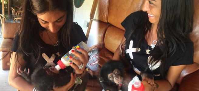 Süreyya Yalçın yavru maymuna annelik yapıyor