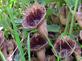 Dünyada sadece Samsun'da bulunan bitkinin yeri s�r gibi saklan�yor