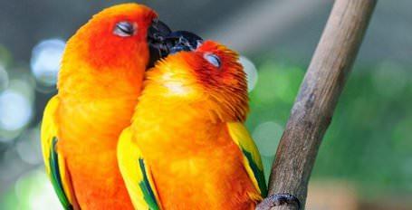 'Hayvanlar da Sever' Dedirten 15 Aşk Dolu Fotoğraf