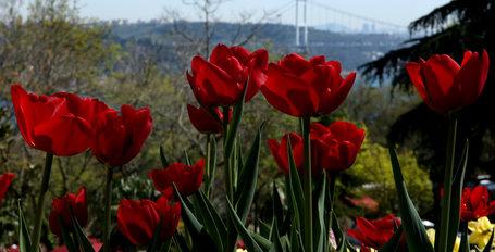 İstanbul yeniden lalelerle buluştu