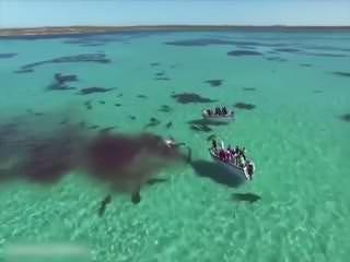 Köpek bal�klar� dev balinay� böyle parçalay�p yedi!