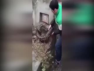 Mezara girmeye çal��an dev y�lan!