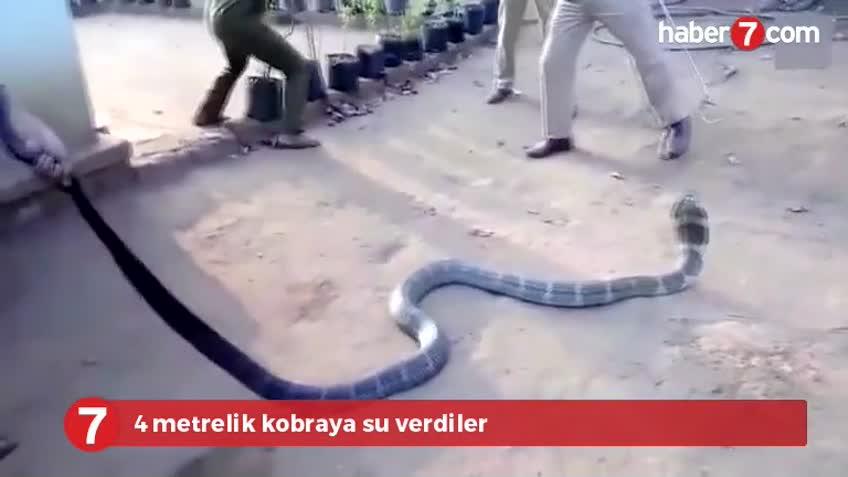 Köye inen 4 metrelik kobraya pet şişede su verdiler
